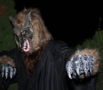 Czernicki Bestiariusz - potwory i zagadki w Noc Muzeum w Czernicy. Będzie ciekawie! ZAPOWIEDŹ