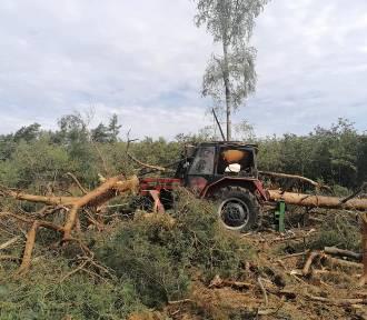 Drzewo przygniotło mężczyznę. Poszkodowany zmarł w szpitalu