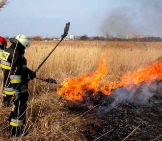 Oświęcim. Pożar traw, jedna osoba poszkodowana, zagrożone domy!