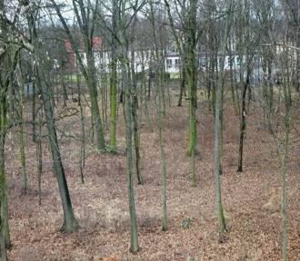 Ruszyła budowa parku gminnego w Ksawerowie