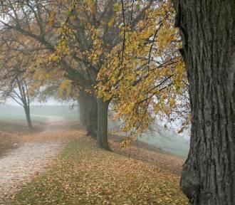 Sprawdź prognozę pogody na piątek, 9 listopada