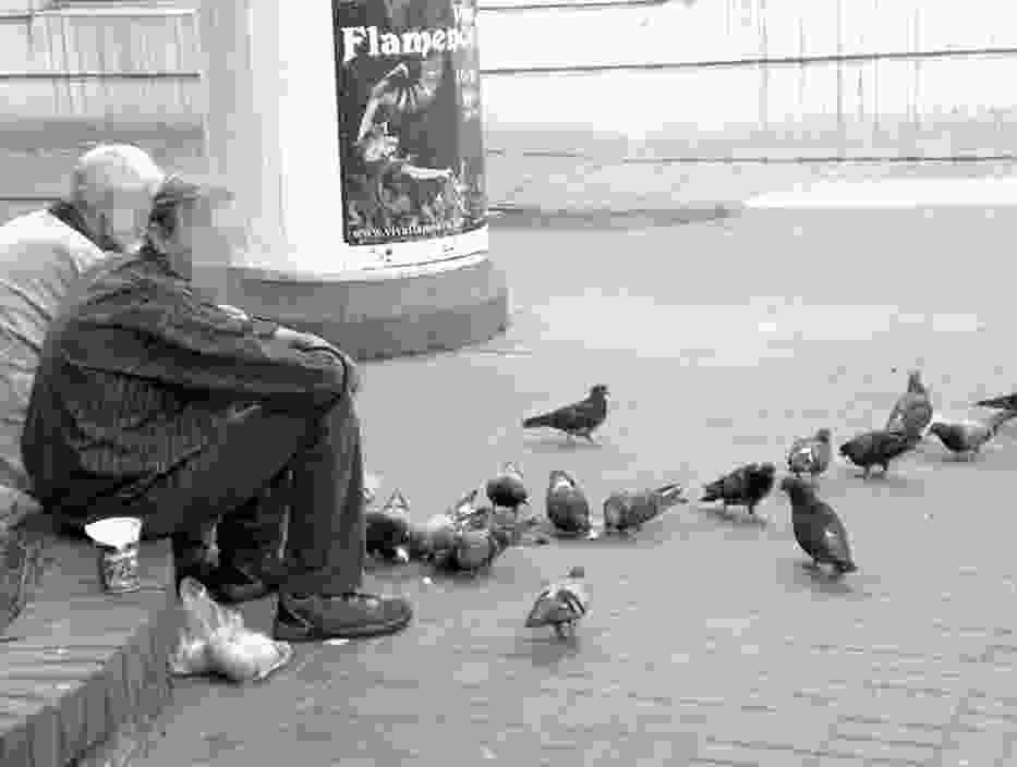 Mimo formalnego zakazu, wielu łodzian dokarmia gołębie także na ul