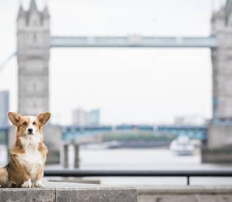 Te rasy psów są uwielbiane przez Europejczyków! Która faworytem w Polsce?