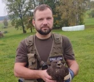 Leśnicy uratowali myszołowa