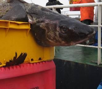 Sztab Kryzysowy Rybołówstwa i Przetwórstwa zablokuje port w Darłowie i Helu