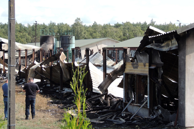 Po pożarze w Dzikowie koło Torunia. Ogień strawił tysiące ptaków [ZDJĘCIA]