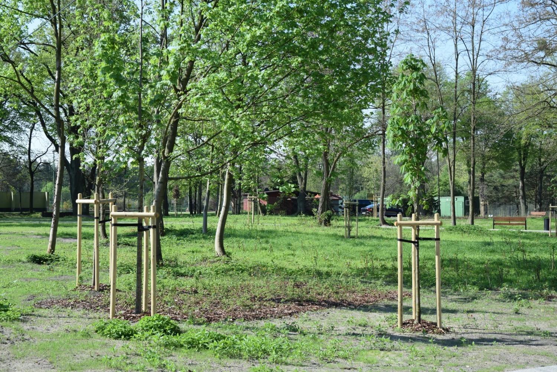Nowy fragment bulwaru nad Lublinicą rozkwita