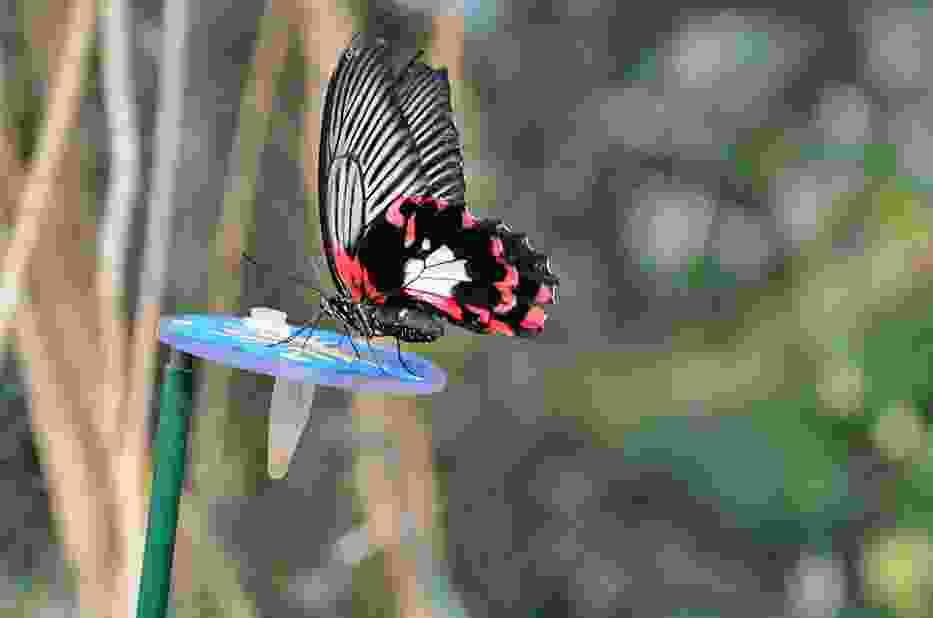 Motyle w palmiarni