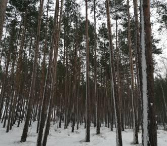 Takiej zimy dawno u nas nie było. Las w śnieżnej oprawie