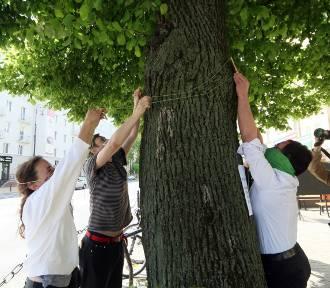"""Mówią """"nie"""" wycince drzew w centrum. Lipa dostała na imię Krzysztof"""