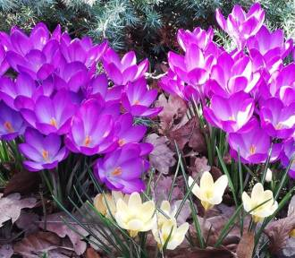 Wiosna w Rybniku internautów! Ciepła niedziela 17 marca [ZDJĘCIA INTERNAUTÓW]