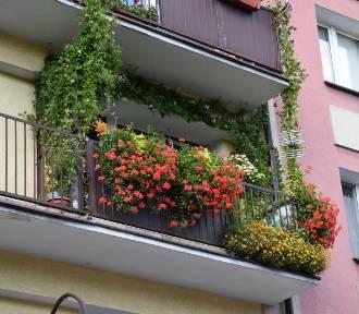 Zobacz najpiękniejsze balkony i loggie w Kaliszu ZDJĘCIA