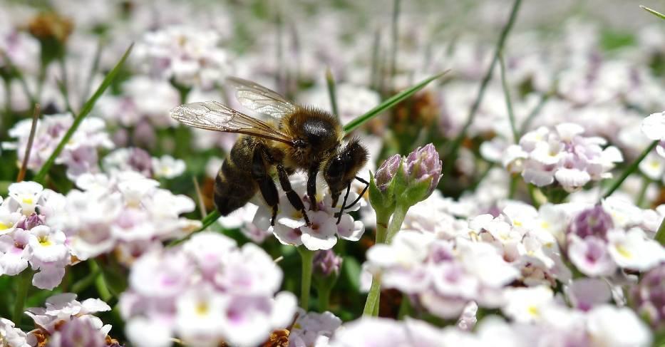 Akademia Przyjaciół Pszczół