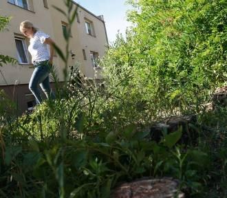 Mieszkańcy Szarych Szeregów w Sycowie oburzeni wycinką tamtejszych drzew
