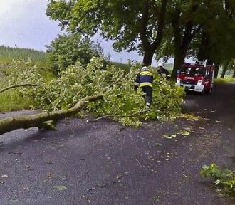 Burze w Lubuskiem. Lokalne podtopienia, powalone drzewa... Strażacy interweniowali 56 razy