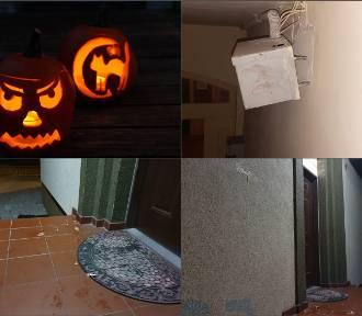 Jak wyglądało tegoroczne halloween w powiecie puckim?