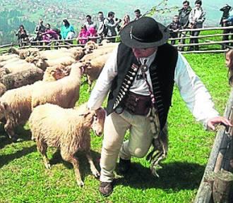 Ponad pół miliona złotych w konkursowej puli, czyli regionalny program Owca Plus na wypasie