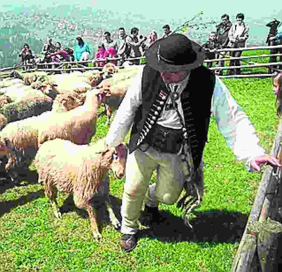 Owca Plus to czynna ochrona przyrody oraz przykład realizacji zasady zrównoważonego rozwoju
