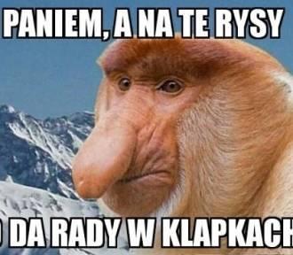 Janusz na wakacjach w górach. Zobaczcie najlepsze memy!
