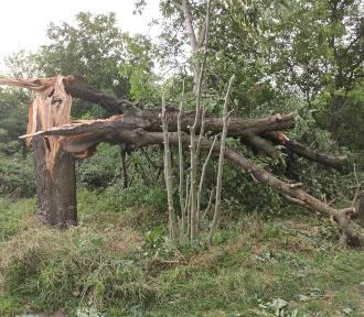 Skutki burzy w Lublinie oczami naszych Czytelników. Zobacz zdjęcia