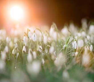 IMGW: W weekend do Polski przyjdzie wiosna? Termometry wskażą 13 stopni Celsjusza!