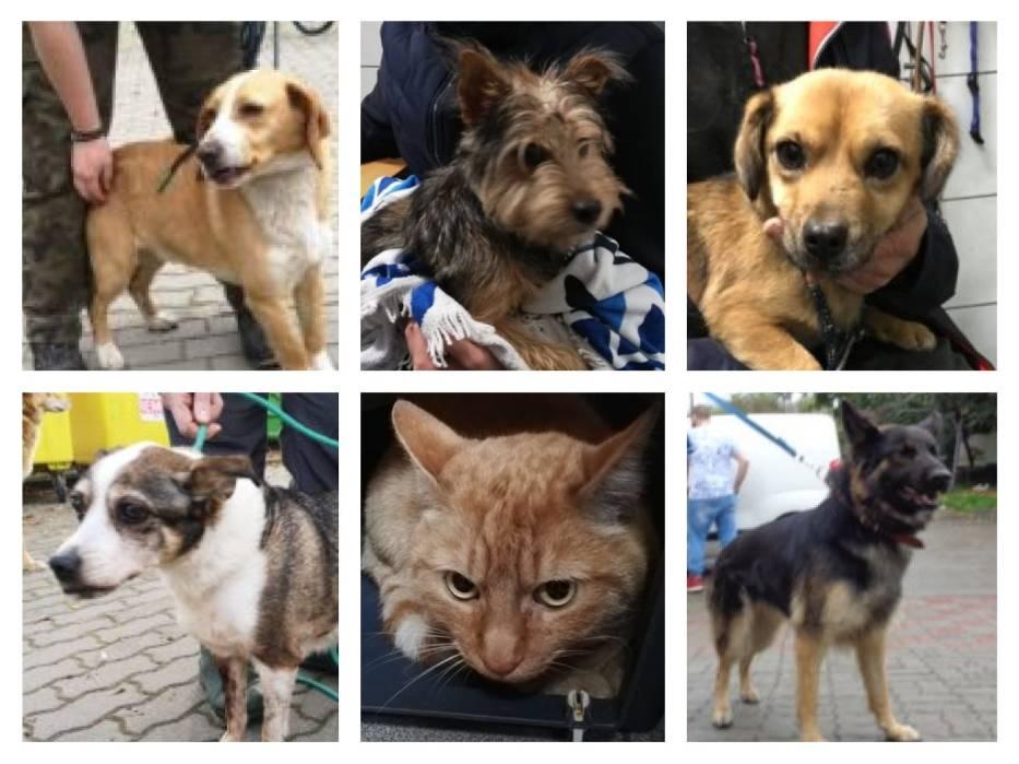 Zobacz zwierzaki, które zostały w ostatnim czasie (w październiku i listopadzie) przyjęte do schroniska w Bydgoszczy