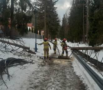 W Tatrach halny. Na Kasprowym Wierchu wieje z prędkością 136 km/h. Połamane drzewa
