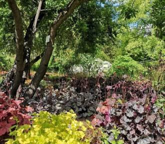 Zabrze: Miejski Ogród Botaniczny otwiera drzwi dla odwiedzających. Zobaczcie co na Was czeka