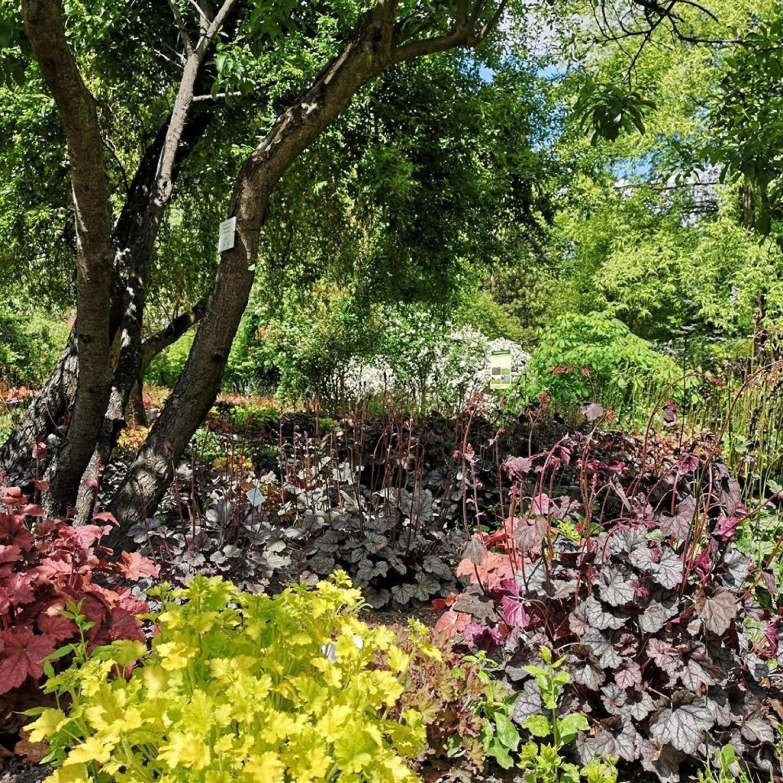 Miejski Ogród Botaniczny otwiera swoje drzwi dla odwiedzającychZobacz kolejne zdjęcia
