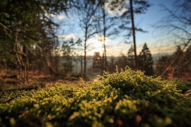 Zbieranie mchu i ściółki leśnejZa zbieranie ściółki leśnej, w tym:> mchu> szyszek> trawy> wrzosów> ziółgrozi grzywna od 20 do 250 zł