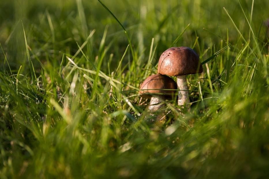 Zbieranie grzybów w miejscach niedozwolonychZa zbieranie grzybów w miejscach niedozwolonych, takich jak:> rezerwaty przyrody> parki narodowe> obszary ochrony ścisłej> obszary Natura 2000> parki krajobrazowegrozi grzywna od 20 do 250 zł