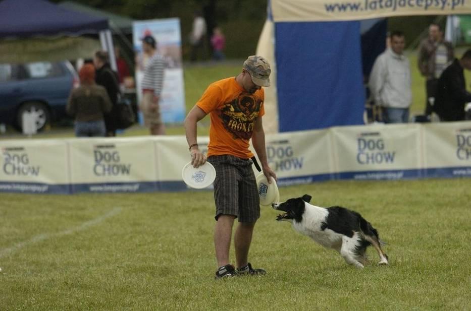 Właściciel rzuca specjalnym dyskiem, którego waga nie może przekraczać 135 gramów, a pies łapie go w locie i przynosi