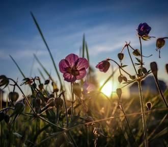 8 życiowych rad od słynnego perskiego mistyka