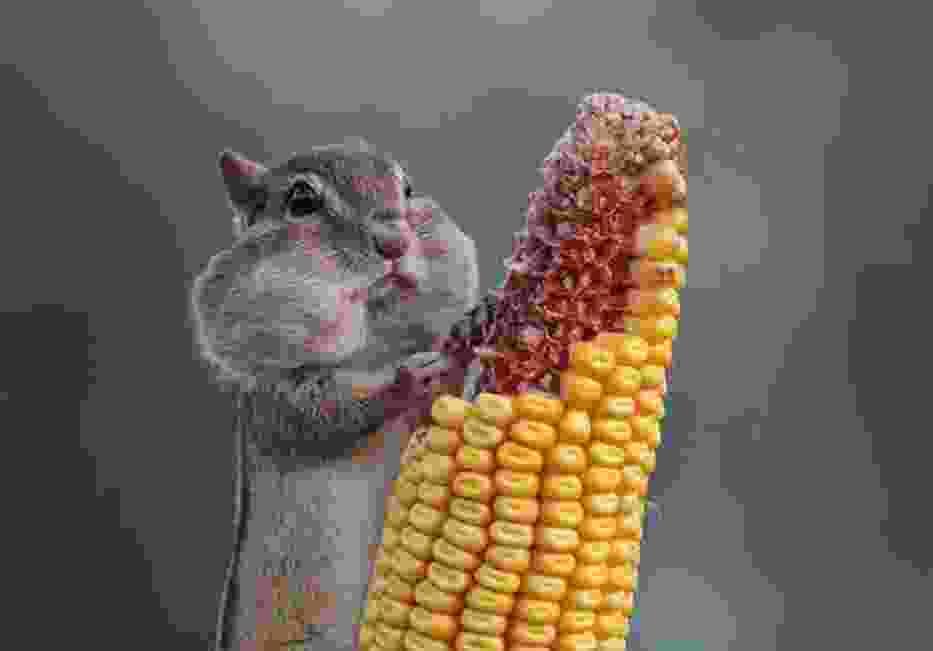 Najśmieszniejsze zwierzęta świata. Te zdjęcia zostały wyróżnione w prestiżowym konkursie