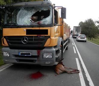 Suchorze. Ciężarówka uderzyła w sarnę. Kierowca trafił do szpitala