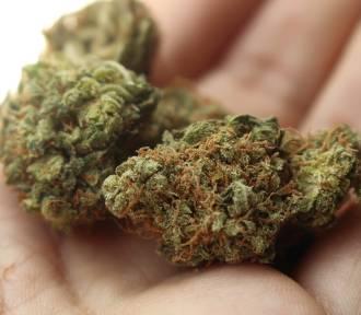 Marihuana w aptekach. Kontrowersyjny przepis wchodzi w życie