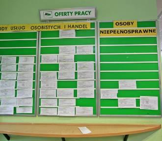 Praca we Włocławku. Aktualne oferty pracy w Powiatowym Urzędzie Pracy [19 lipca 2019]
