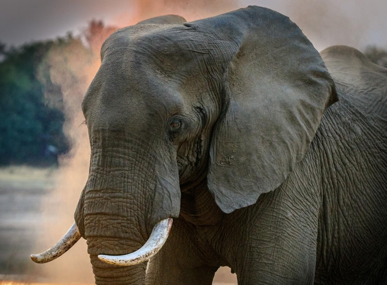 #11 Zakazane pamiątki z wakacji - wyroby z kości słoniowej