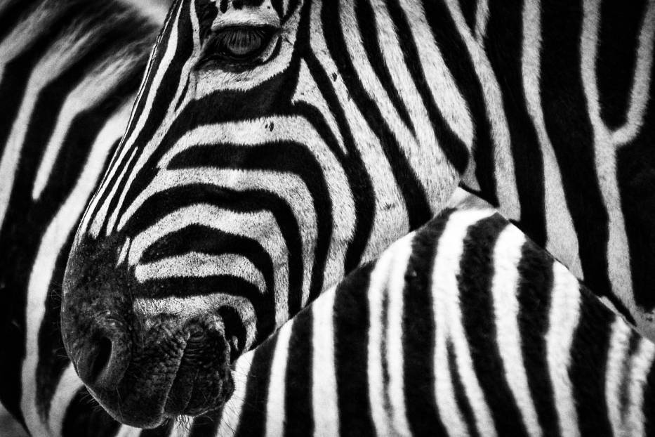 #10 Zakazane pamiątki z wakacji - wyroby ze skóry zebry