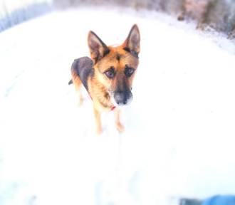 """Czy psy ze skierniewickiego schroniska trafią do """"psiego więzienia""""? To będzie dramat"""