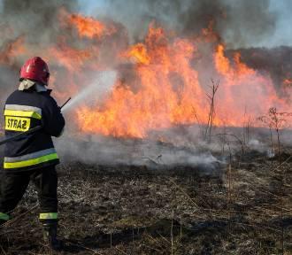 Wiosenna plaga pożarów traw. Jest ich coraz więcej