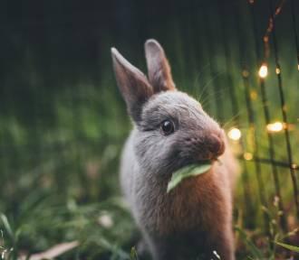 Życzenia Wielkanocne 2018 [krótkie, zabawne, SMS]