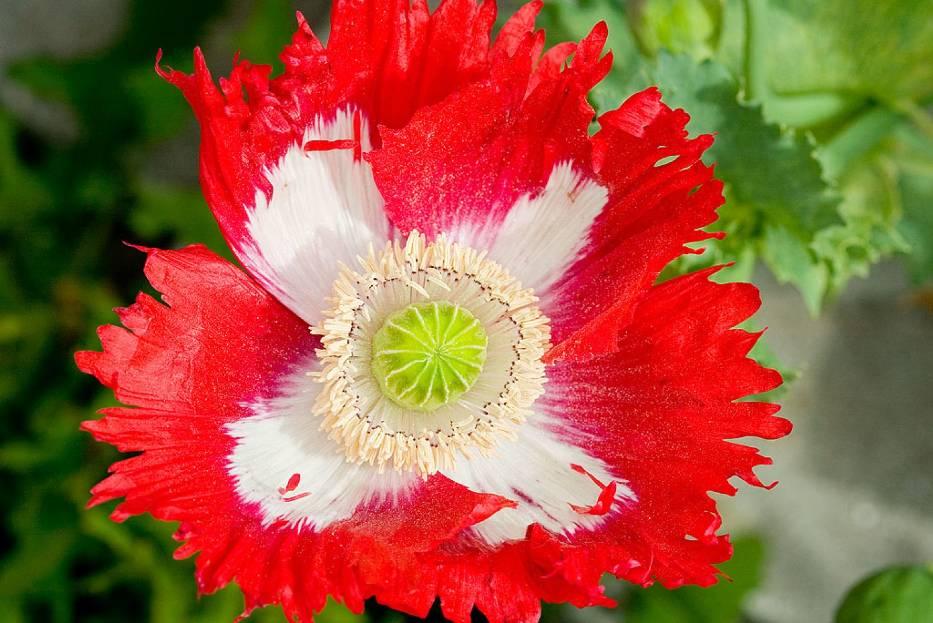 [QUIZ] wiosenny. Rozpoznasz te kwiaty?
