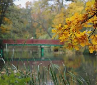 Przyszła jesień, coraz chłodniej. Sprawdź prognozę pogody