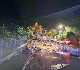 Świecie. 75 interwencji strażaków! Wichura w nocy połamała drzewa i zmiażdżyła auto