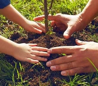 Akcja #sadziMY. Każdy będzie mógł posadzić swoje drzewko