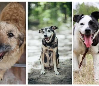 Psy do adopcji w woj. śląskim. Piękne pieski w schronisku czekają