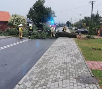 Skutki burz w powiecie. Zerwane dachy, powalone drzewa, 1 osoba ranna