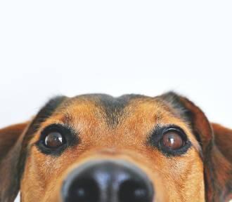 Oto komendy, które pies KAŻDEJ RASY powinien znać! [TOP 10]