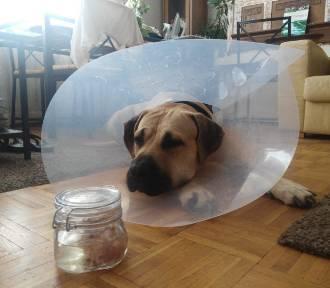 Na os. Jagiełły ktoś atakuje psy gazem pieprzowym? [WIDEO]